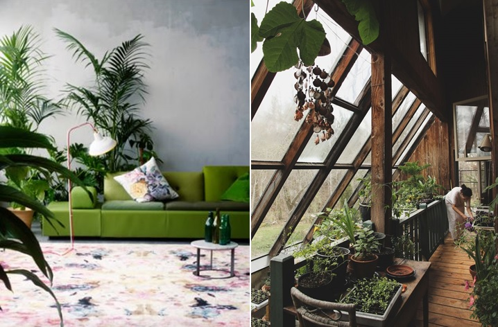 urban house furniture. Keeping Plants In Your Home Not Only Make Space Look Beautiful But Can Also Bring Many Physical And Mental Health Benefits. For Those Of You Living Urban House Furniture